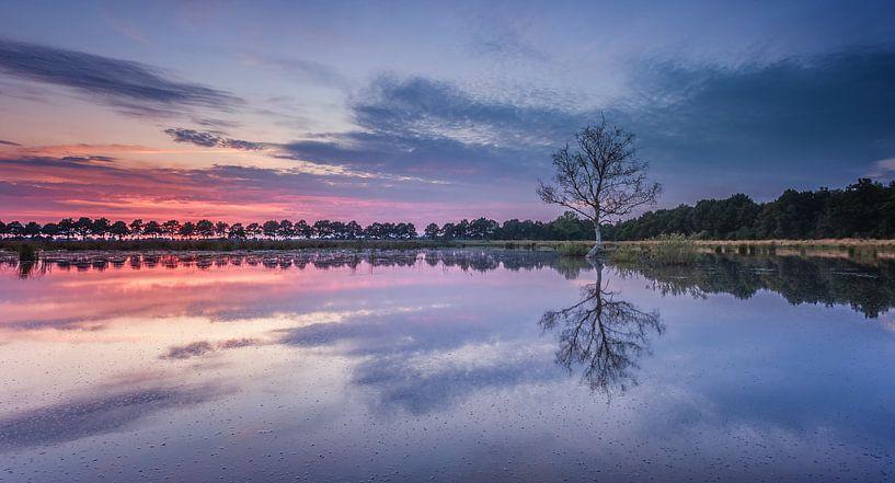 1 boompje in het water tijdens zonsondergang van Martijn van Dellen