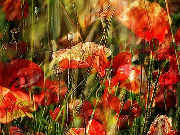 Mohnblumen beim Sonnenbad im Wind von Anita Snik-Broeken