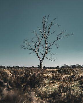Isolatie van Colin van Wijk