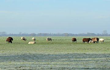 Niederländische Landschaft mit einer Schafherde auf einer gefrorenen Wiese bei Woerden, Utrecht, Nie von Robin Verhoef