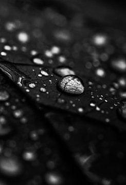 Tropfen schwarz-weiß von Milou Hinssen