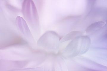 Pastelkleurige bloemblaadjes van LHJB Photography