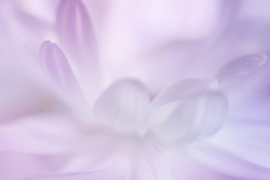 Pastelkleurige bloemblaadjes