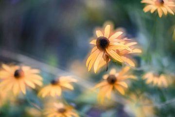 Blumen Teil 25 von Tania Perneel