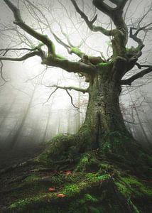 Witch of nature van