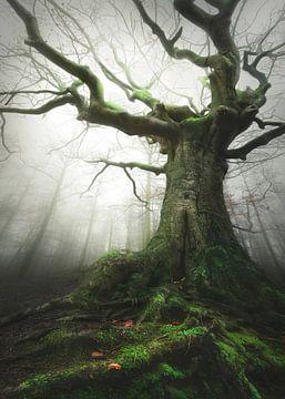 Witch of nature van Rob Visser