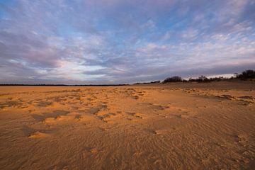 Sonnenaufgang – Nationalpark De Loonse en Drunense Duinen von Laura Vink