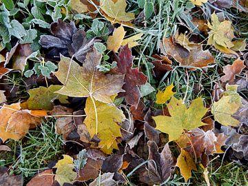herfstbladeren in het gras van Joke te Grotenhuis