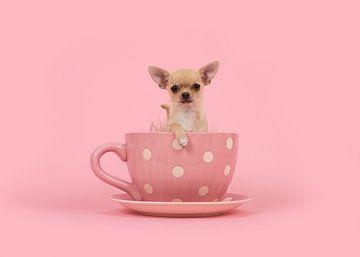 Kelch von Chihuahua von Elles Rijsdijk