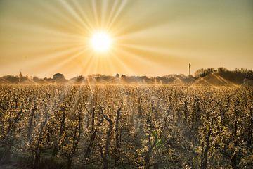 Morgenzon boven de boomgaard van Bart Nikkels