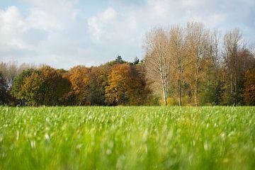 In der Mitte des Grases schaue ich auf die Bäume, die sich im Herbst verfärben von Michel Geluk