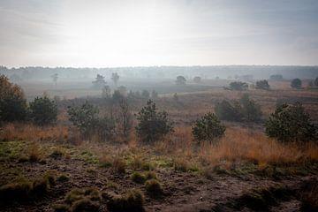 Nebel auf dem Moor von Suzanne Schoepe