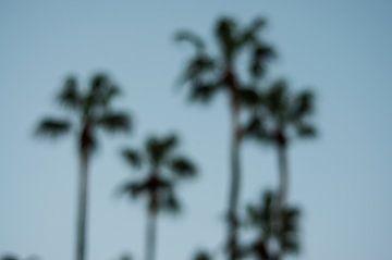 Palmbomen van Niek Belder