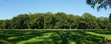 Eichenwaldmauer von Wim vd Neut