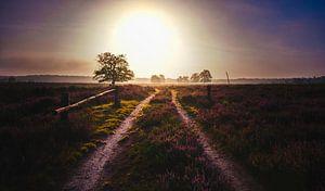 Heide bij zonsopkomst van Jeroen Mondria