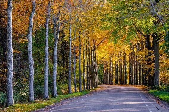 Het goud van de herfst