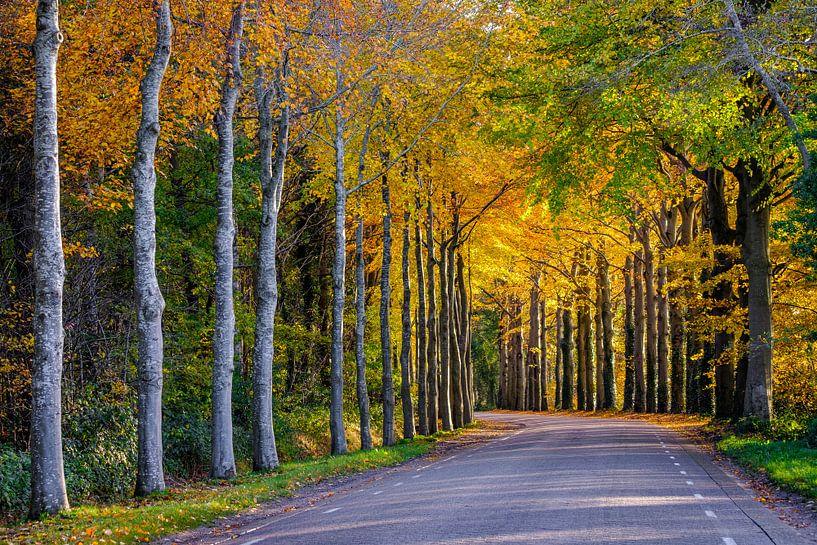 Het goud van de herfst van Tvurk Photography