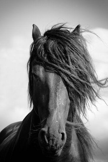 Friese paard staande in de wind. van Jan Brons