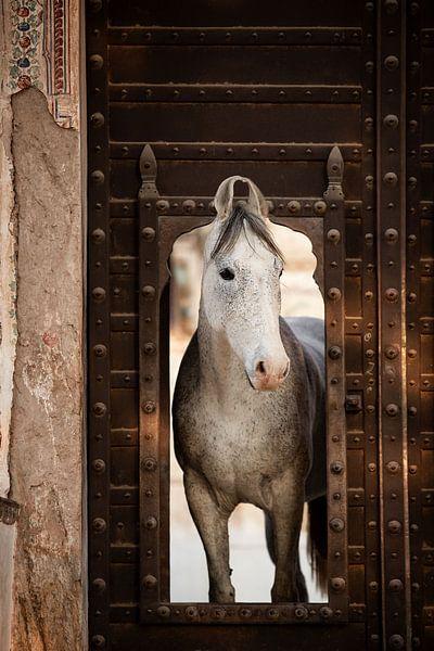 Marwari-Pferd in einem Haveli in Indien | Reisefotografie von Lotte van Alderen