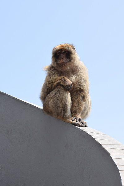Einsamer Affe braucht Liebe von Sama Apkar