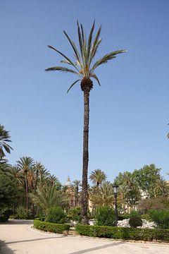 Tuin van Villa Bonanno in Piazza della Vittoria , Palermo, Sicilië, Italië, Europa van Torsten Krüger
