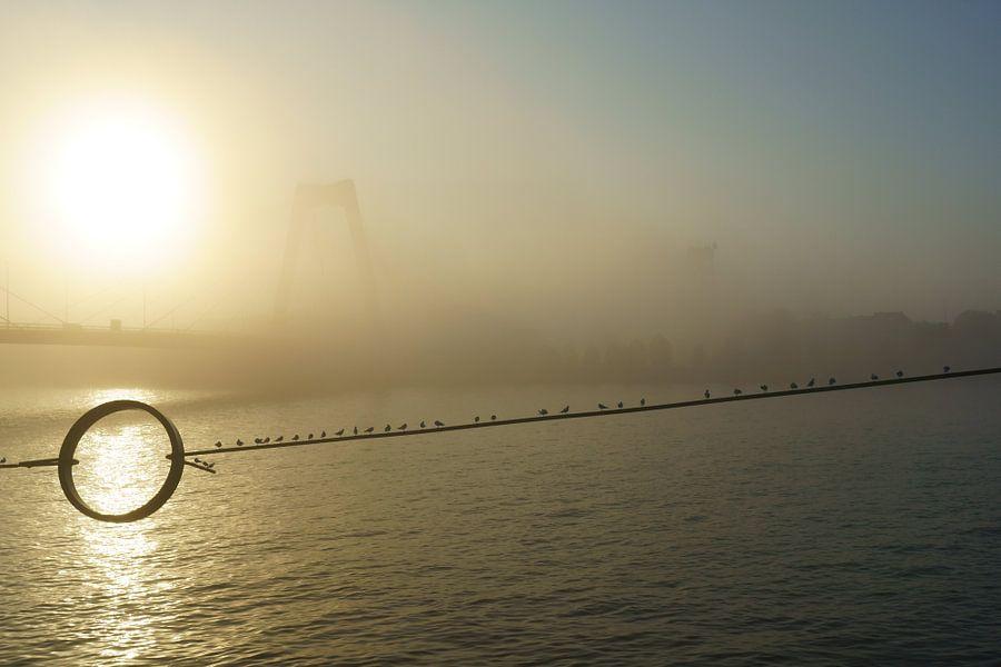 Willemsbrug Rotterdam in de mist