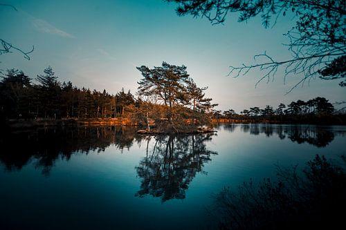 meer met boom in het water