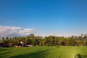 Terrasrijstvelden in Bali, Indonesië