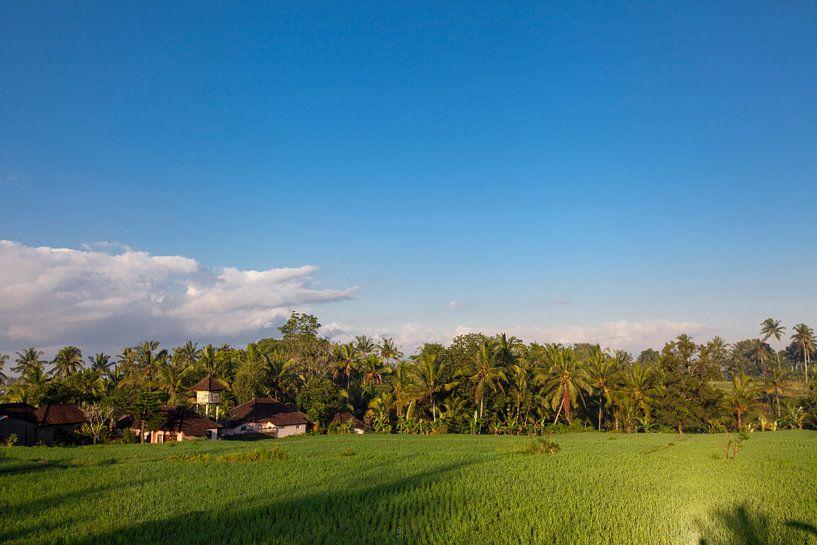 Terrasrijstvelden in Bali, Indonesië van Tjeerd Kruse