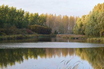 Najaar in de Dordtse Biesbosch van Nicolette Vermeulen
