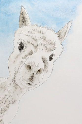 De nieuwsgierige alpaca