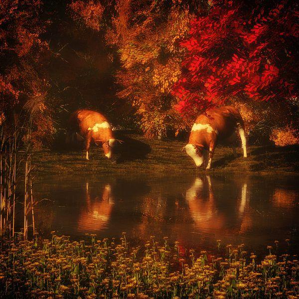 Dierenrijk – Drinkende koeien in het bos van Jan Keteleer