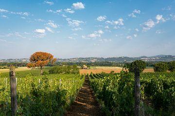 De heuvels bedekt met wijngaarden van Chianti. Tucany, Italië. van Tjeerd Kruse