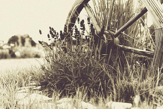 Landhaus Stil Altes Holzrad mitten umgeben von Lavendel