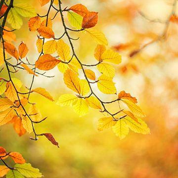 Kleurrijk herfstblad van Hans Lunenburg