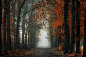 Extreme Autumn van