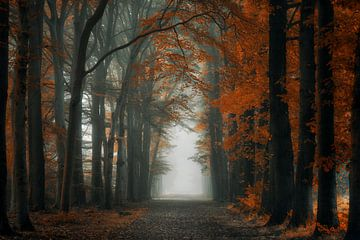 Extreme Autumn van Martin Podt