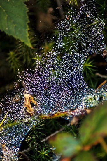 Dauwdruppels in het spinnenweb