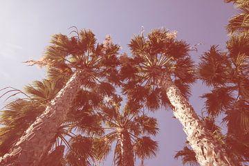 Vintage Palmbomen  van
