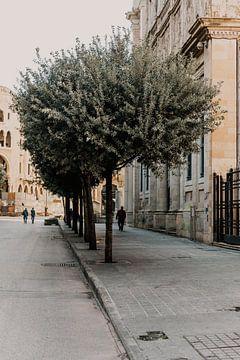 Mann geht unter einem schönen Olivenbaum in Beirut, Libanon von Moniek Kuipers