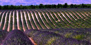 Lavandelveld Provence Frankrijk van