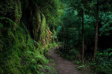 Waldweg ins Unbekannte von Ellis Peeters