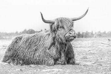 Schottischer Highlander von Marian van der Kallen Fotografie