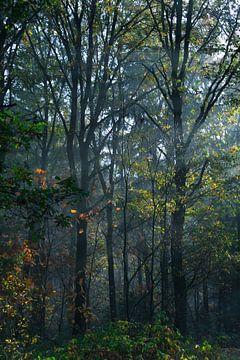 Die Bäume II von Joran Quinten