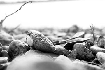 Küste in schwarz weiss von Ingrid Meuleman