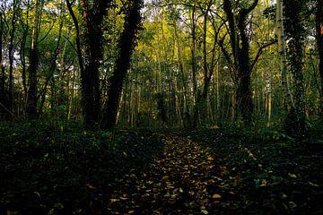 Herbst im Wald. von Tallest_tulip