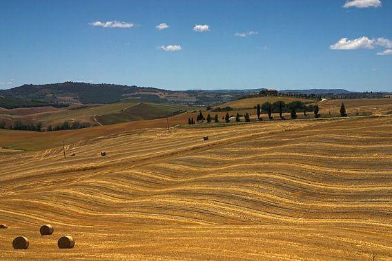 Golvende heuvels in Toscane