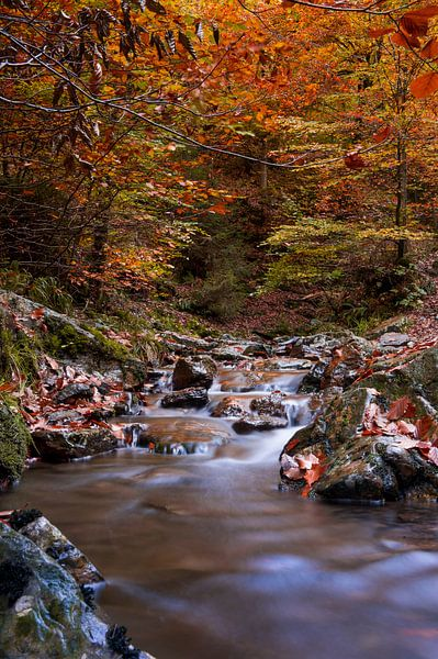 Herfst stroompje van Photography by Karim