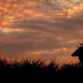 Silhouet van hert bij zonsondergang van Ilya Korzelius