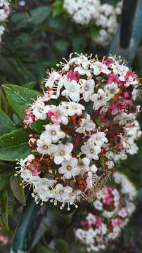 bloem von S C
